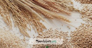 Zakat dan Nishab Hasil Panen Pertanian, Ini Detail Perhitungannya
