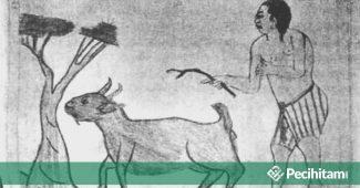 Apakah Berhubungan Seks dengan Hewan Termasuk Zina? Bagaimana Hukumnya?